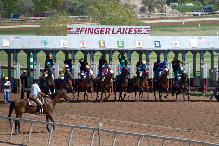 The starting stalls at Finger Lakes Racetrack